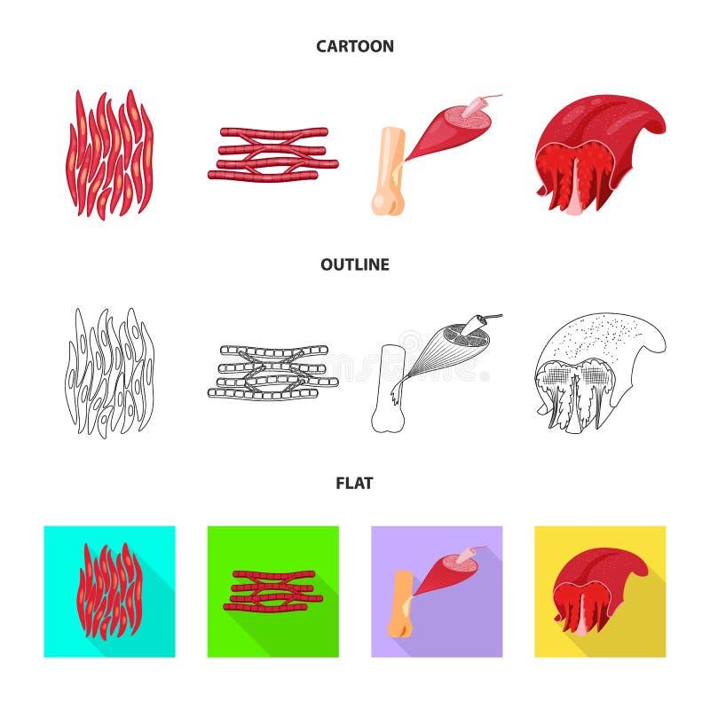 Odosobniony przedmiot włókno i mięśniowy znak Kolekcja włókna i ciała akcyjna wektorowa ilustracja ilustracja wektor