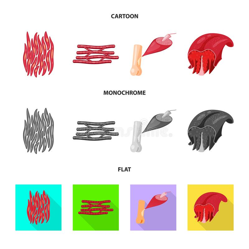 Odosobniony przedmiot włókno i mięśniowy znak Set włókna i ciała akcyjny symbol dla sieci ilustracji