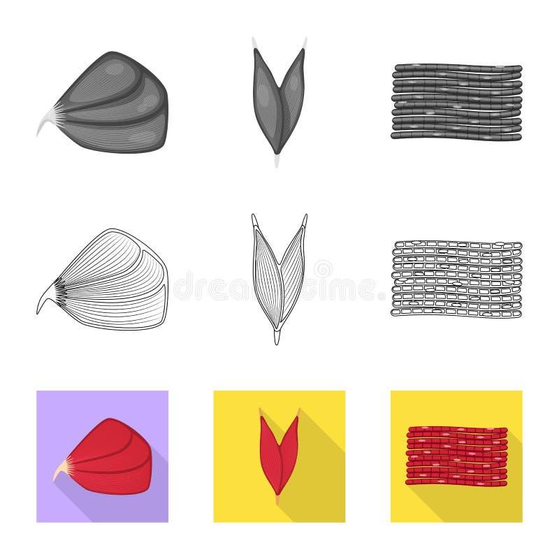 Odosobniony przedmiot włókno i mięśniowy znak Set włókna i ciała wektorowa ikona dla zapasu ilustracja wektor