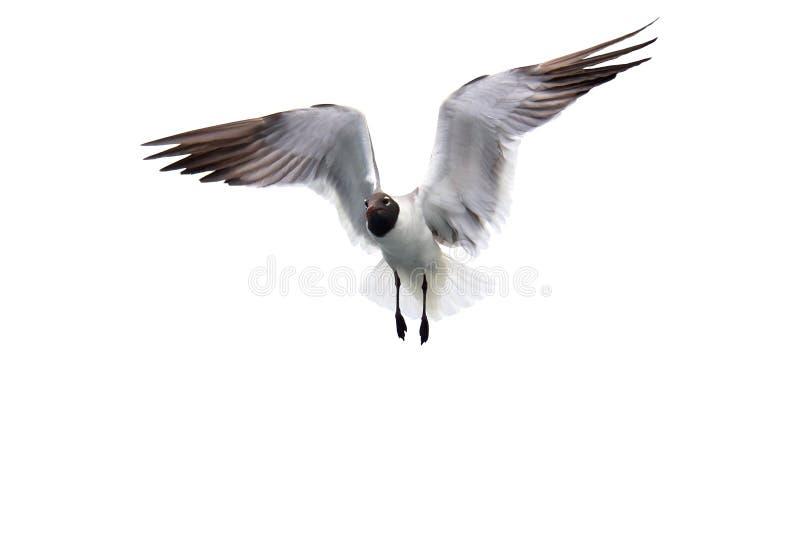 odosobniony seagull obrazy stock