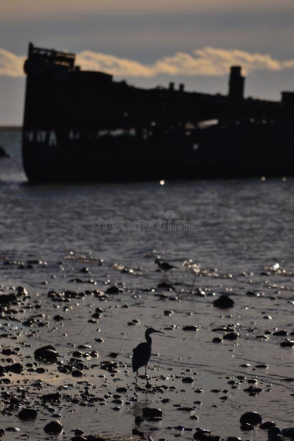 Odosobniony shipwreck w Motueka, Nowa Zelandia zdjęcia stock