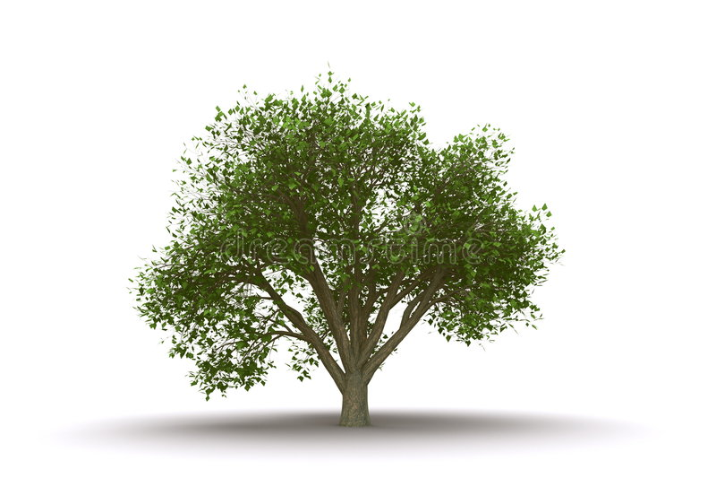 odosobniony wiązu drzewo ilustracji