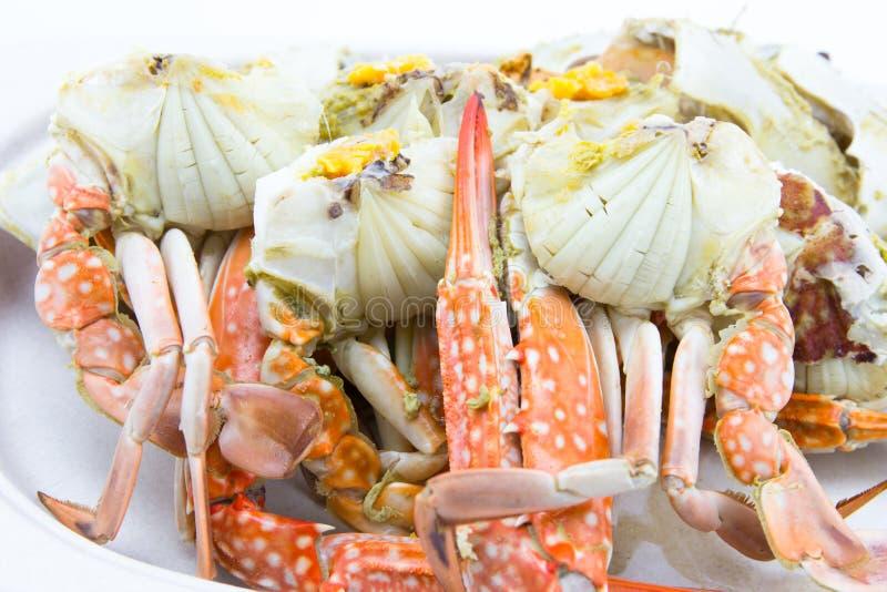 Odparowany krab zdjęcie stock