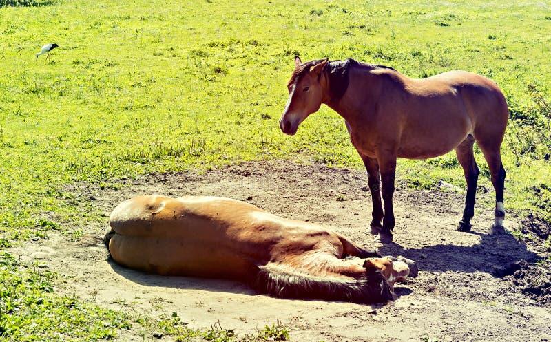 Download Odpocząć koni zdjęcie stock. Obraz złożonej z odpoczynek - 57653550
