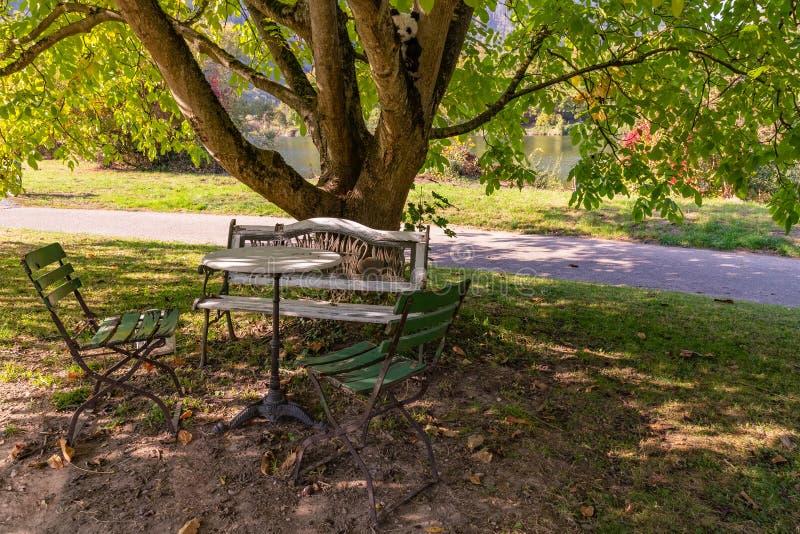 Odpoczynek pod drzewem w cieniu obrazy royalty free