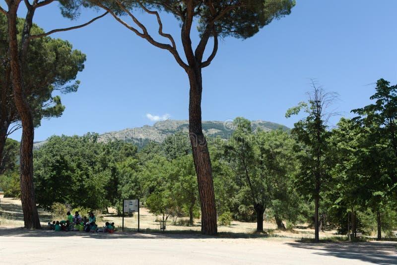 Odpoczynek w parku pod sosną Hiszpania fotografia stock