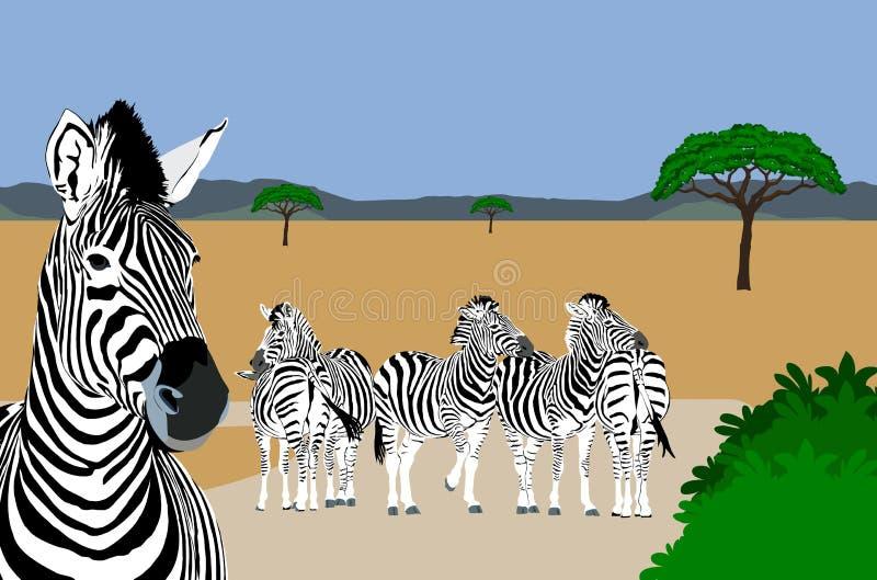 odpoczynkowe drogowe zebry royalty ilustracja