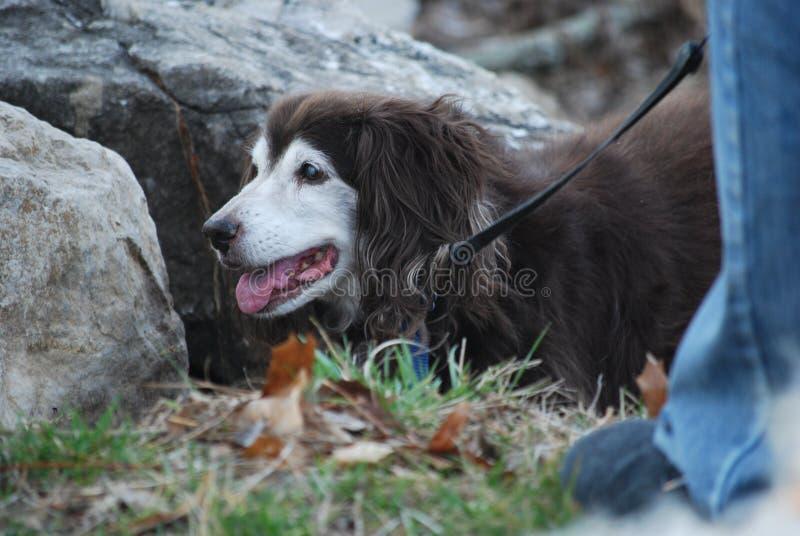 Odpoczynkowy pies obraz stock