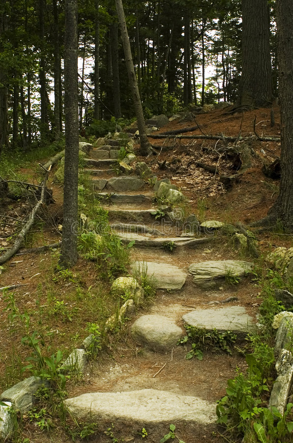 odprowadzić lesisty ścieżki obraz stock