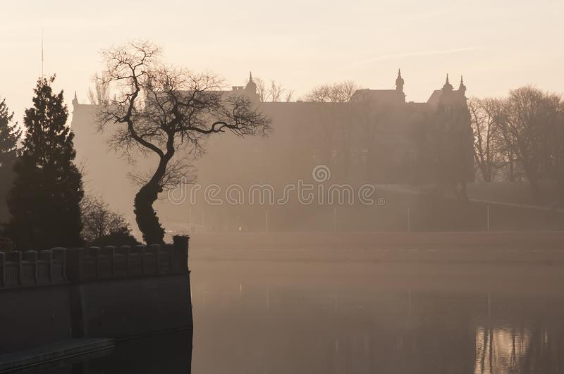 Odra river and tree on Ostrow Tumski in the morning fog. Sunrise over river. Wroclaw royalty free stock images