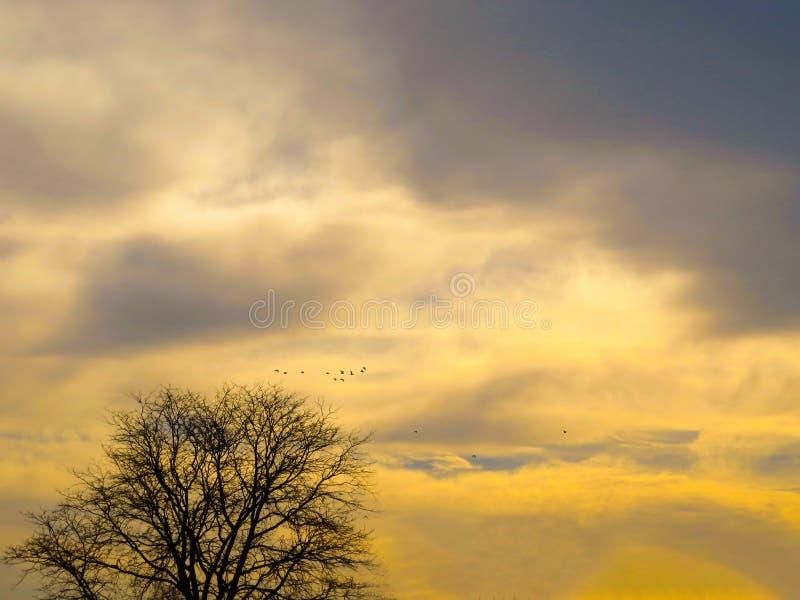 Odrobina złoto Przez nieba I kolor żółty zdjęcie stock