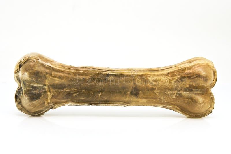 odruch doży kości. zdjęcie royalty free