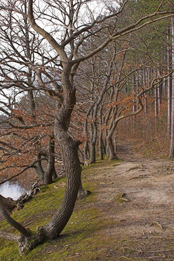 odrzutowiec ścieżki lasu zdjęcia stock