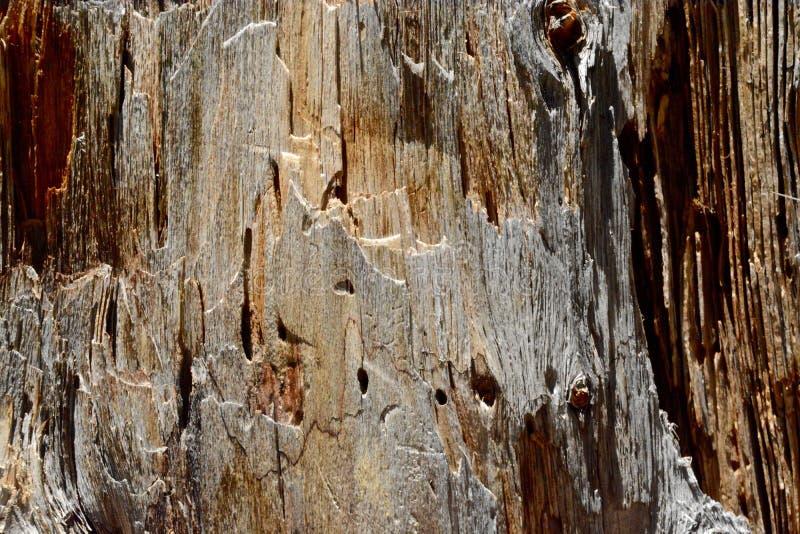 Odsłonięta barkentyna zdjęcia stock