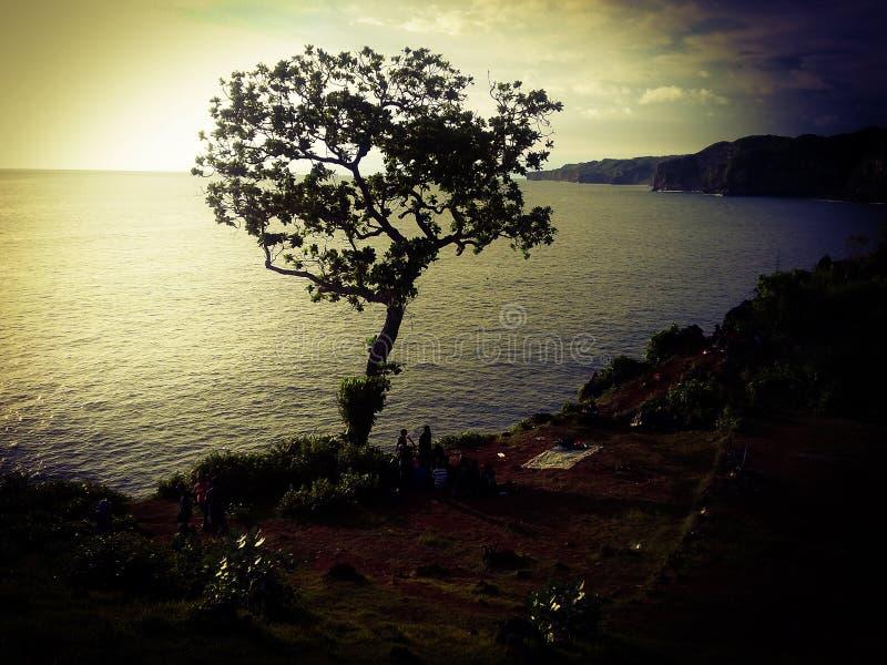 odwiecznie drzewo obraz royalty free