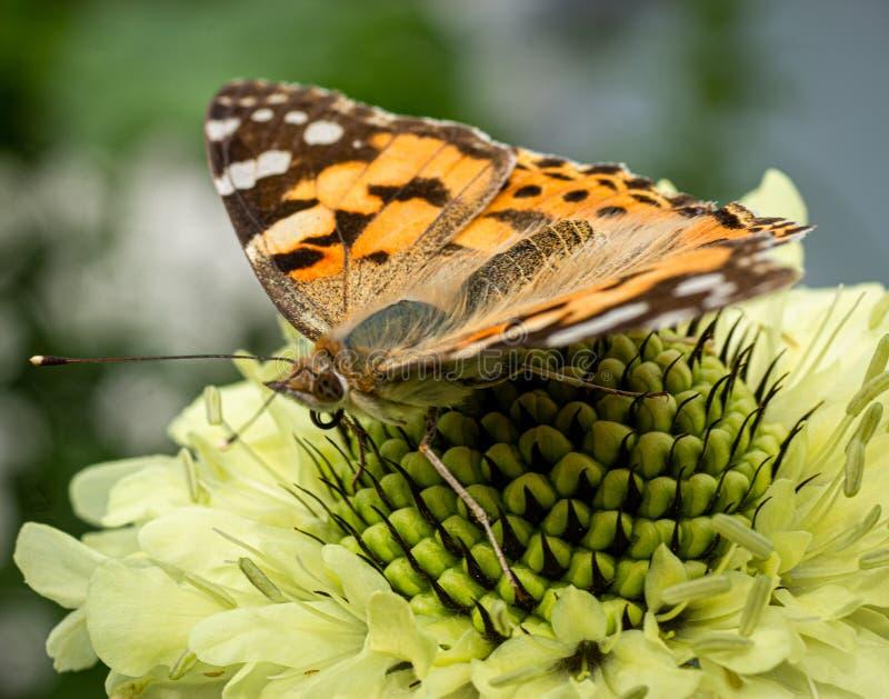 Oeil à observer avec un papillon photo stock