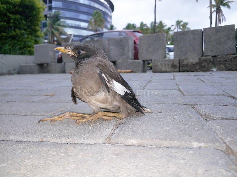 Oeil d'oiseau images stock