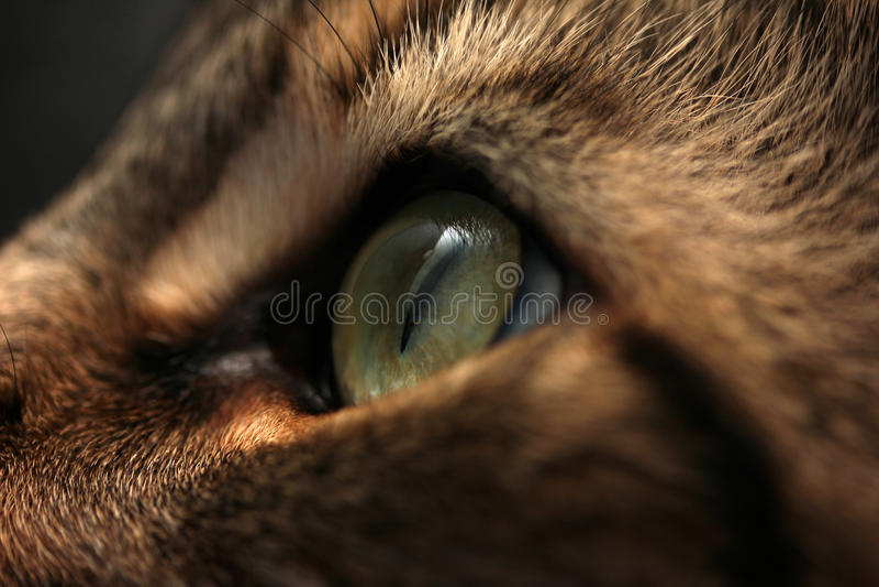 Oeil d'un chat photo libre de droits