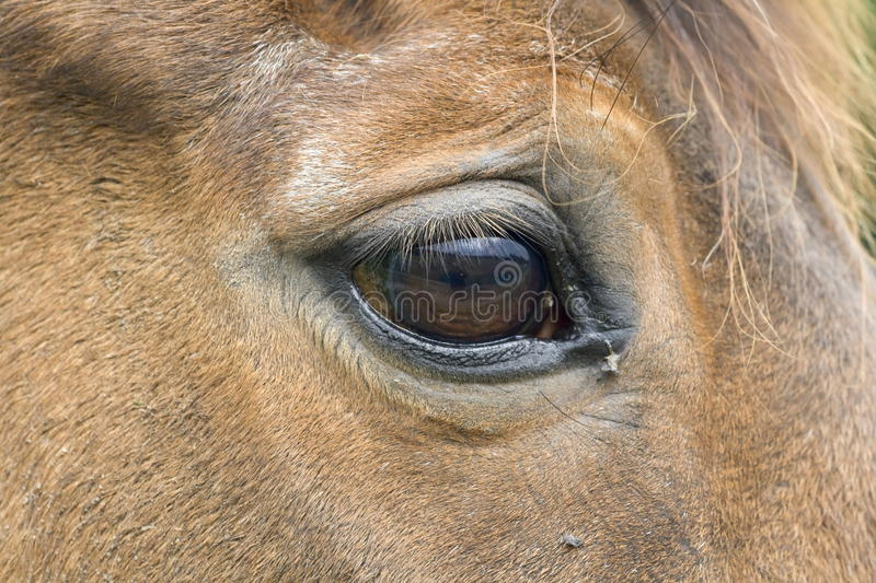 Oeil d'un cheval photo libre de droits