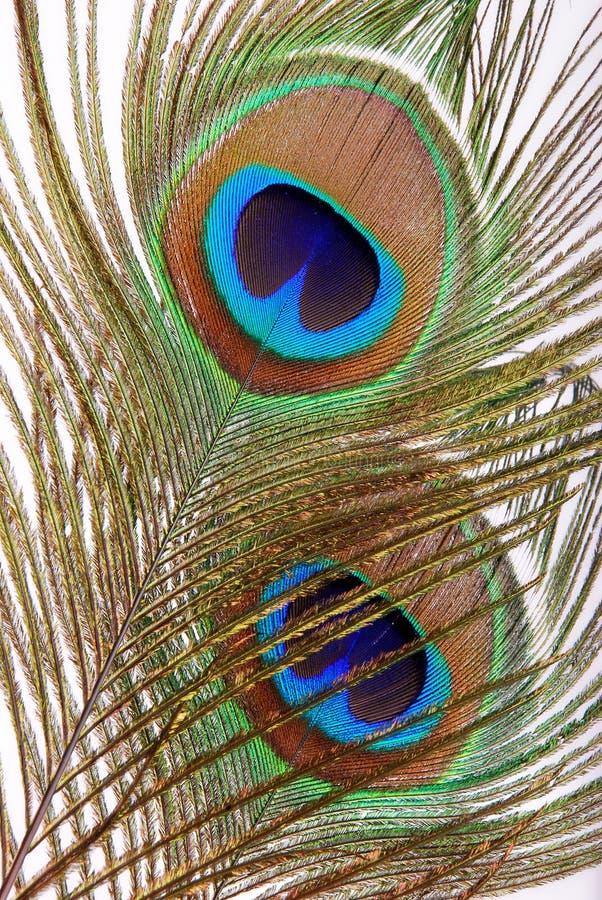 Oeil de clavette de paon photographie stock