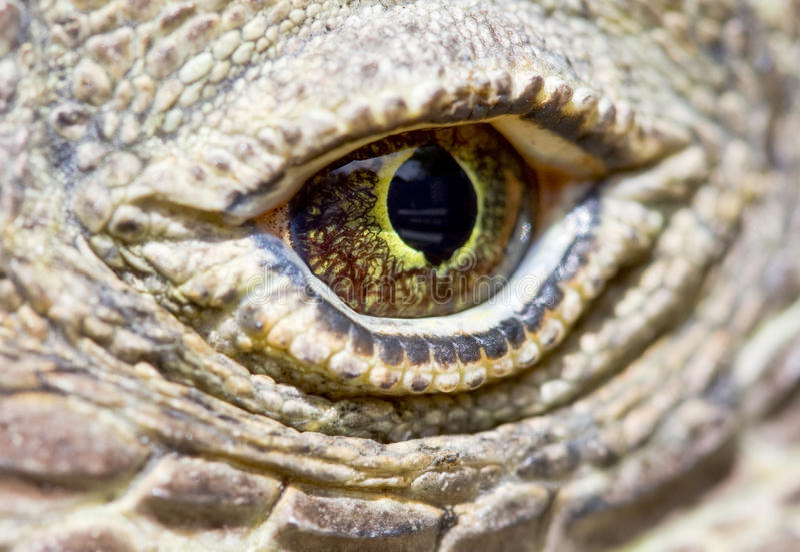 Oeil de dragon de Komodo image libre de droits