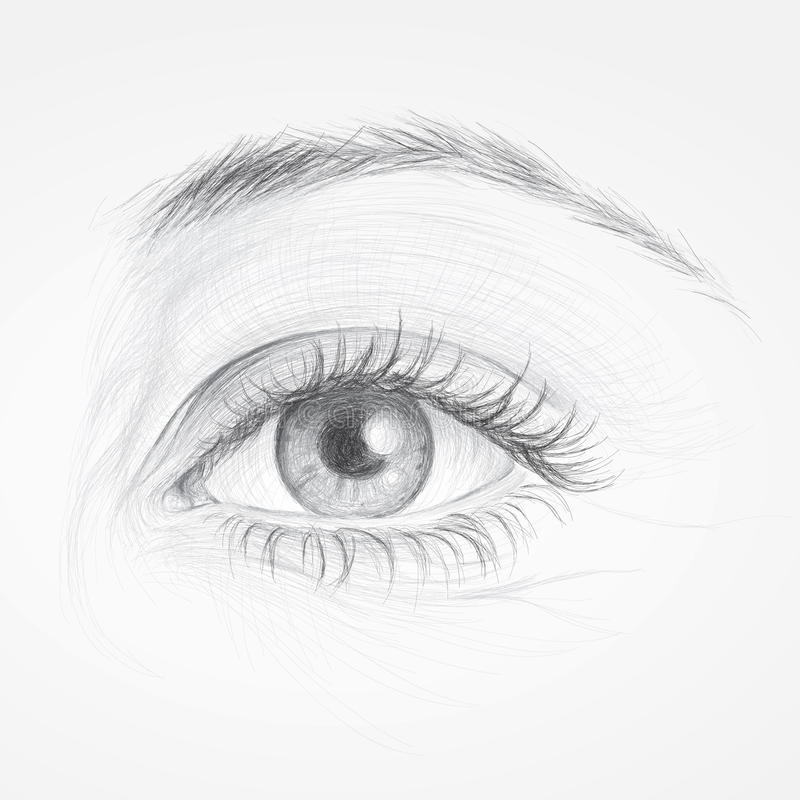 Oeil de femme illustration stock