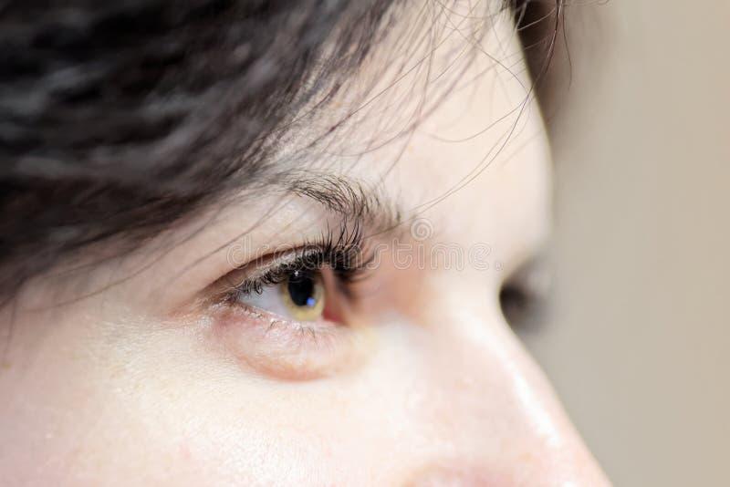 Oeil de femme avec de longs cils avec le foyer sur des cils photographie stock libre de droits