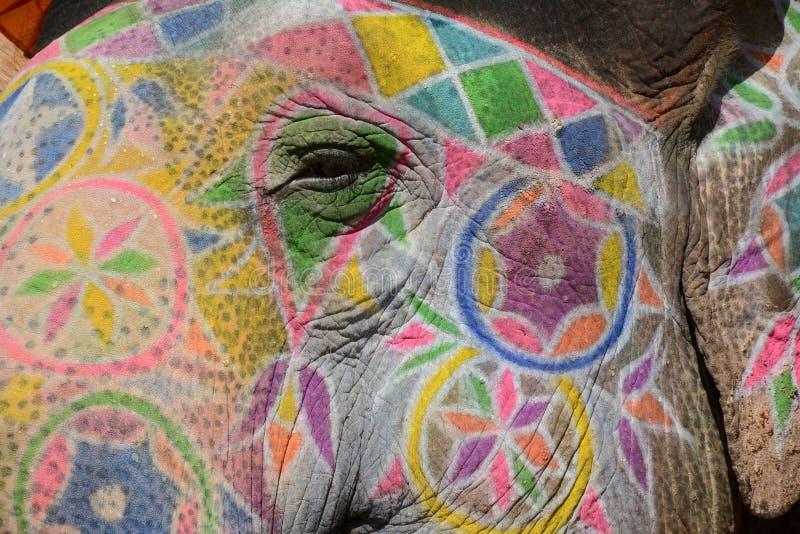 Oeil de l'éléphant photo stock