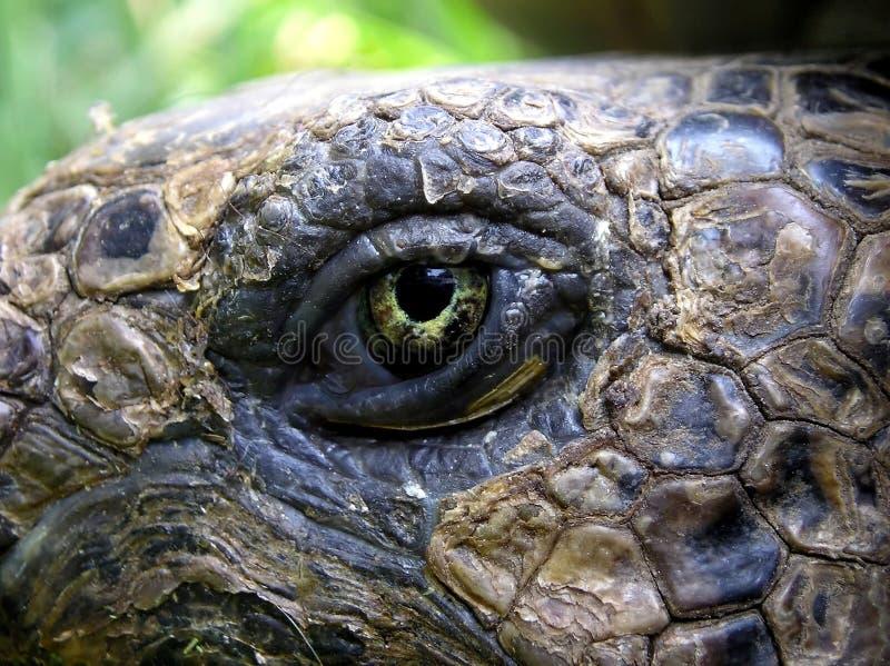 Download Oeil de la tortue image stock. Image du macro, vieux, reptile - 744877