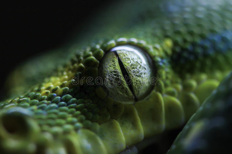 Oeil de serpent photographie stock