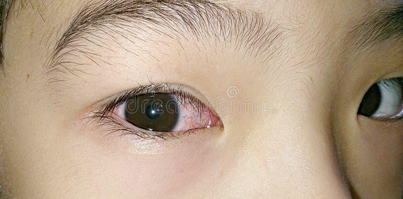 Oeil droit rose photo libre de droits