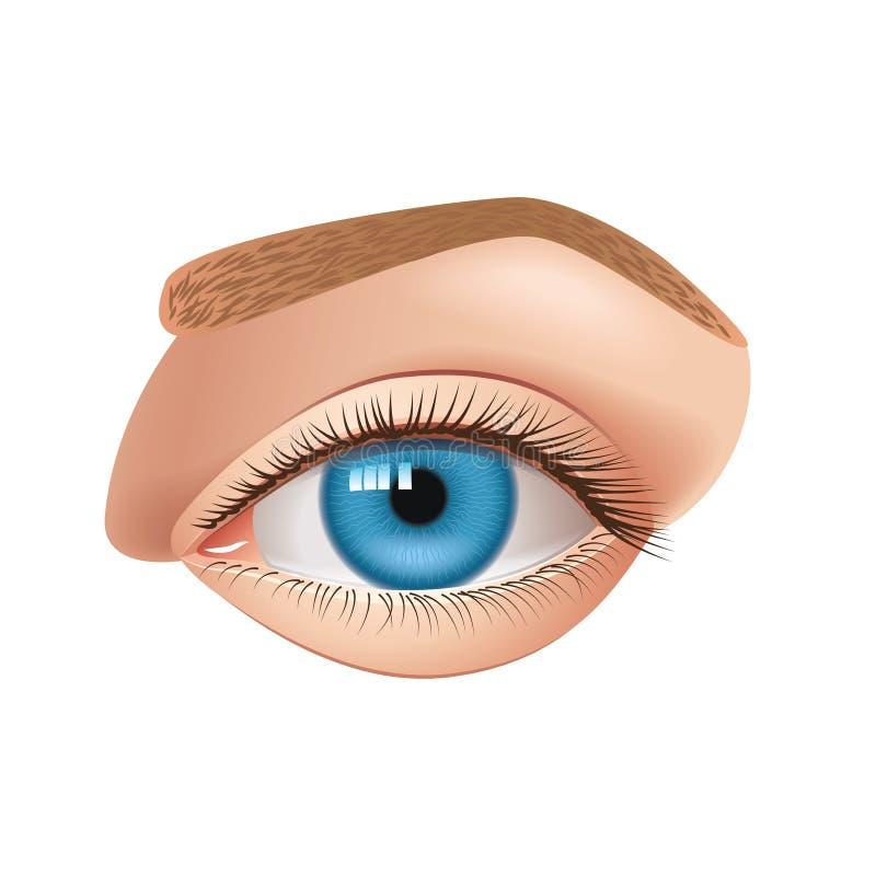 Oeil humain d'isolement sur le vecteur blanc illustration stock