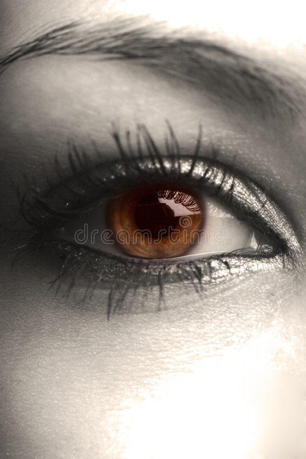 Oeil noisette photographie stock