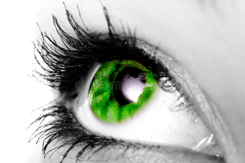 Oeil vert photo stock