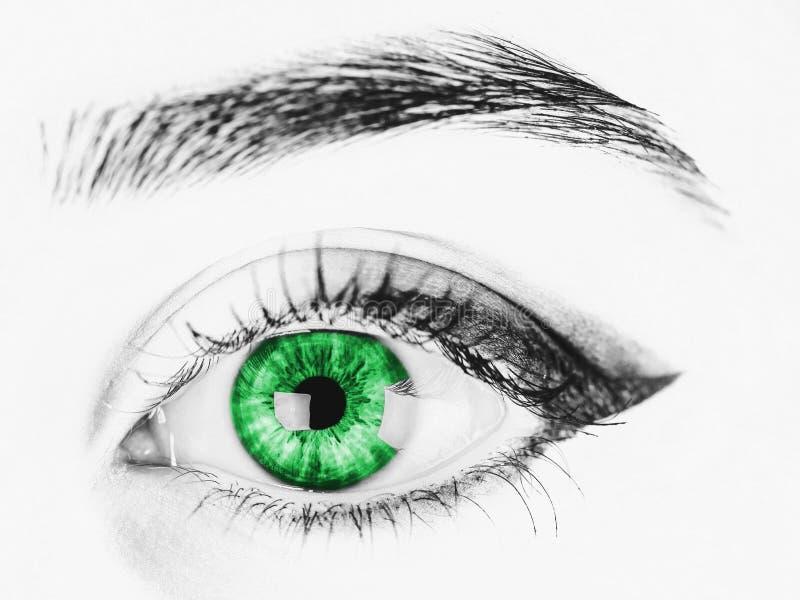 Oeil vert de femme noire et blanche photo stock
