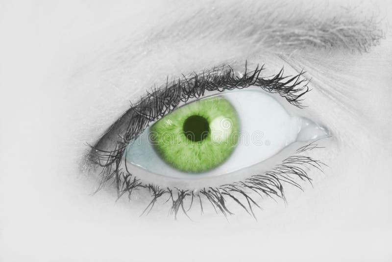 Oeil vert Piercing image libre de droits
