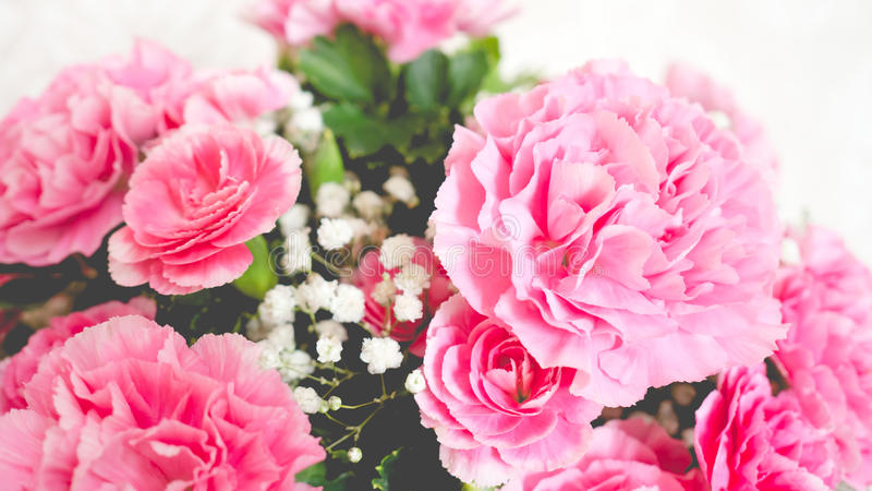 Oeillets roses images libres de droits