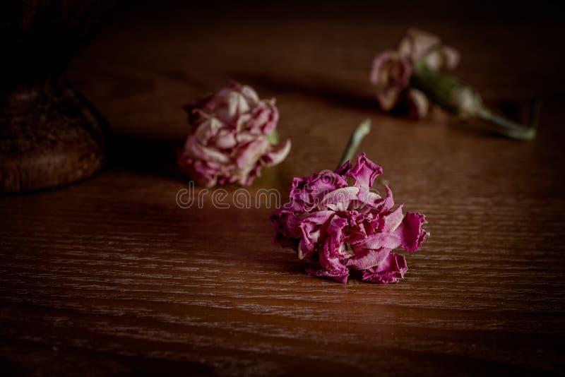 Oeillets roses complètement secs sur la table en bois images stock