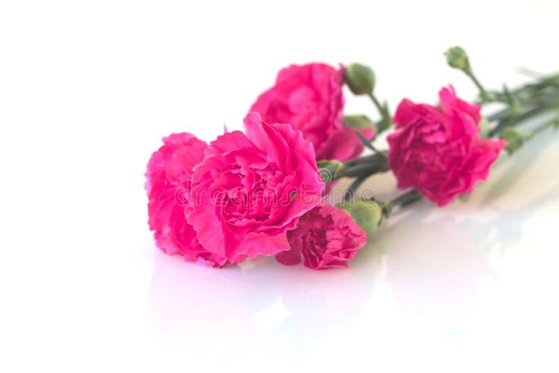 Oeillets roses sur le fond blanc images stock