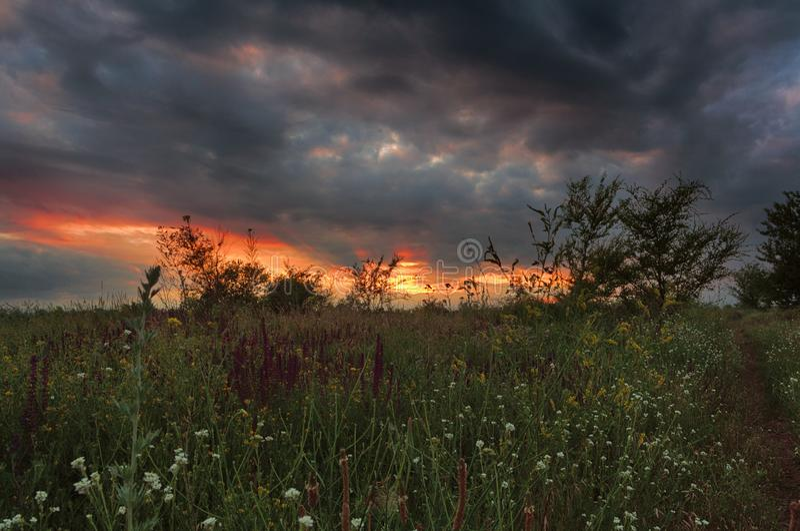 Oekraïens de zomerlandschap Grasclose-up Zonsondergang in steppe Zonsondergang bij de wilde aard stock foto's