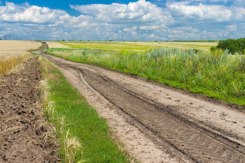 Oekraïens de zomerlandschap met graangebieden en weg stock foto's