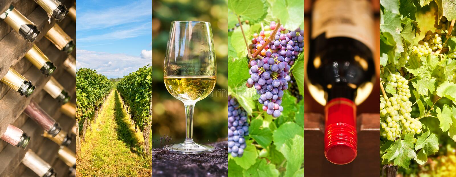 Oenology and wine panoramic photo collage, wine concept royalty free stock photos