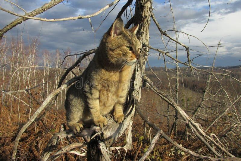 Oerhörd katt på trädfilialen arkivfoto