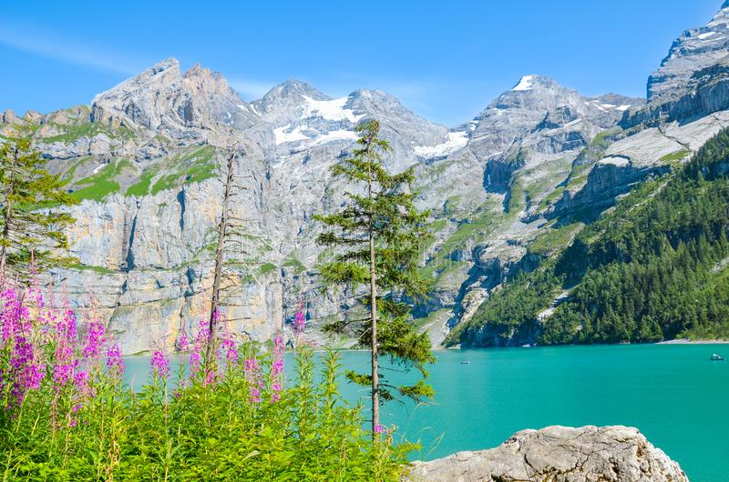 Oeschinen Lake, Oeschinensee in Switzerland photographed on a sunny day with pink Alpine flowers. Turquoise lake with rocky. Mountains in background. Alpine stock photo