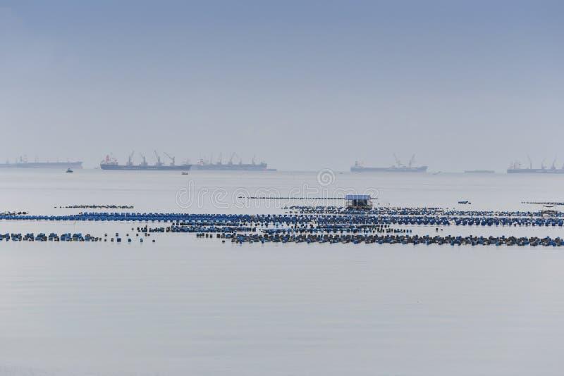 Oesterlandbouwbedrijf op kustgebied van Thailand stock foto's