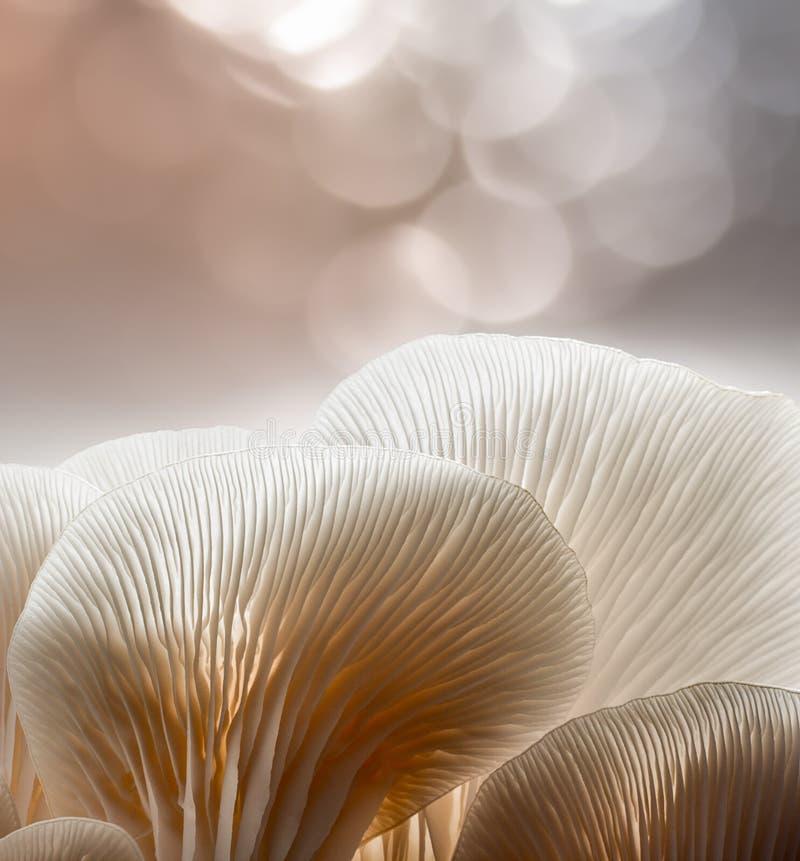 oesterpaddestoel in installatiekinderdagverblijf royalty-vrije stock afbeeldingen