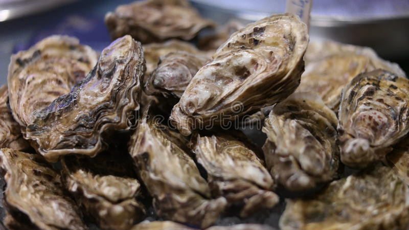 oesters royalty-vrije stock afbeelding