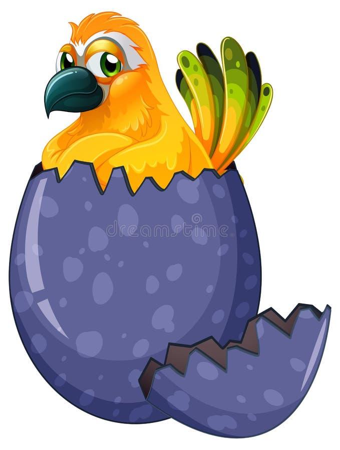 Oeuf à couver jaune d'oiseau d'ara illustration stock