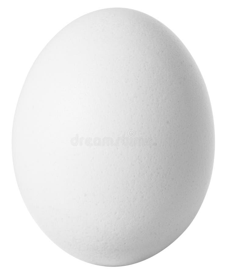 Oeuf blanc d'isolement sur le fond blanc photos libres de droits