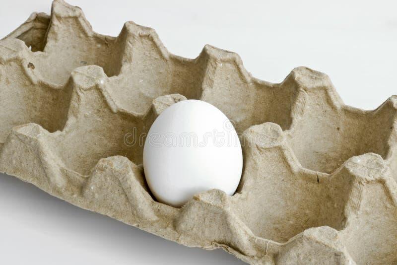 Oeuf blanc isolé dans le paquet de carton pour des oeufs images libres de droits